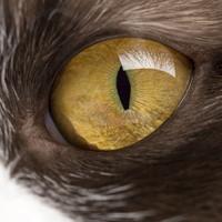 Cat-Eye200