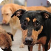 animal_shelter