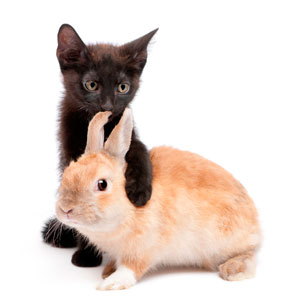 cat-and-rabbit